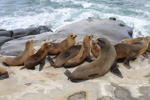 Stinky Sea Lions